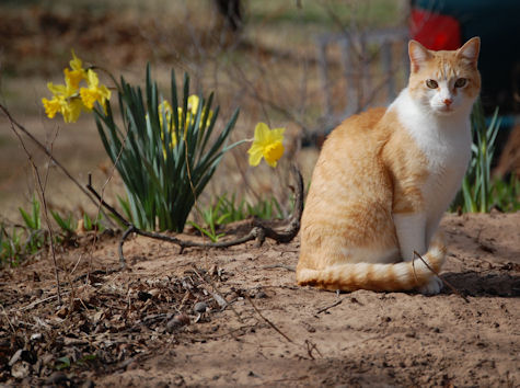 Country kitty