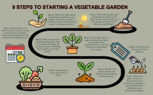 Steps to starting a vegetable garden