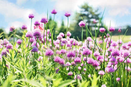 Flowers in your Edible Landscape