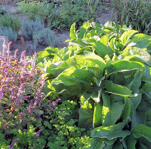 Common Herb Gardening Mistakes