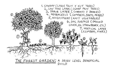 Permaculture in the Home Prepper Garden