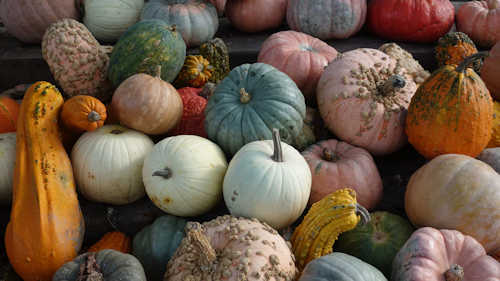 Plant Pumpkins for Fall Interest