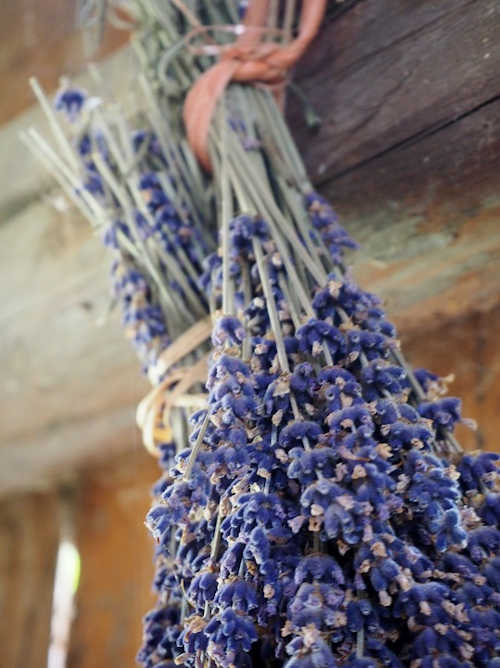 tied lavender drying